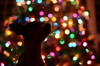 Schöne Weihnachten und einen guten Rutsch ins neue Jahr!